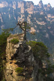 Alleinbaum auf der felsigen Spitze in China Lizenzfreies Stockfoto