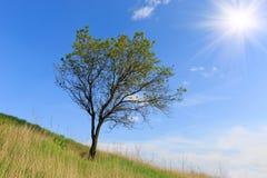 Alleinbaum auf der Steigung des Hügels Lizenzfreie Stockfotos