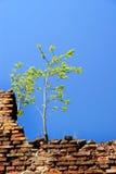 Alleinbaum auf der Wand Lizenzfreie Stockfotos