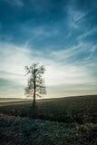 Alleinbaum auf der Wiese Lizenzfreie Stockfotos