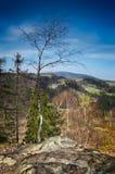 Alleinbaum auf die Oberseite des Berges Stockfotografie