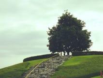 Alleinbaum auf grünem blauem Himmel der Wiese und des freien Raumes Stockbild