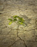 Alleinbaum auf trockener Erde Stockfotografie