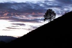 Alleinbaum in der Landschaft Stockbilder