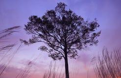 Alleinbaum in der Spitze des Berges Lizenzfreie Stockbilder