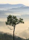 Alleinbaum in der Spitze des Berges mit Nebel im Tal unten Stockfotos