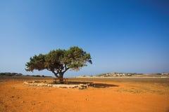 Alleinbaum in der Steinwüste Stockfotografie
