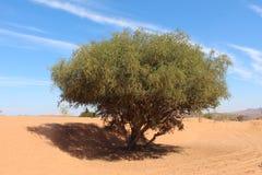 Alleinbaum in der Wüste Lizenzfreie Stockbilder