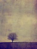Alleinbaum der Weinlese Stockbilder