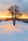 Alleinbaum in der Wintersonnenaufganglandschaft - Natur Stockbilder