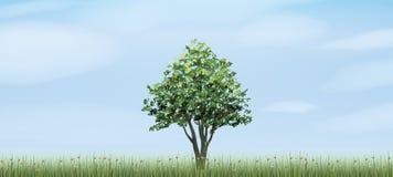 Alleinbaum im grünen Feldbereich mit Hintergrund des blauen Himmels und der Wolken Stockfotos