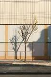 Alleinbaum im Metallnetz Stockbild