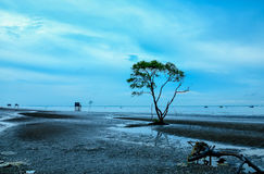 Alleinbaum im Strand Stockbild