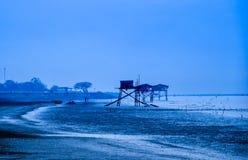 Alleinbaum im Strand Stockfoto