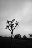 Alleinbaum mit klarem Himmel lizenzfreie stockbilder