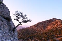Alleinbaum am Rand der Klippe Lizenzfreie Stockfotografie