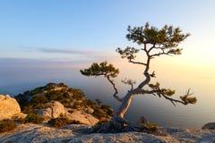 Alleinbaum am Rand der Klippe Stockbild