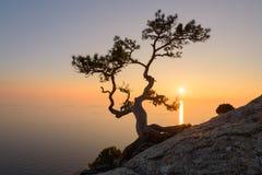 Alleinbaum am Rand der Klippe Lizenzfreies Stockfoto