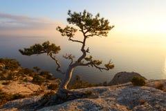 Alleinbaum am Rand der Klippe Stockfotos