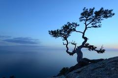 Alleinbaum am Rand der Klippe Stockfotografie