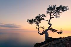 Alleinbaum am Rand der Klippe Stockfoto
