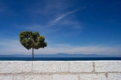 Alleinbaum und weiße Wand Stockbild