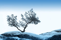 Alleinbaum wachsen über blauem Himmel auf Stein Stockfotografie