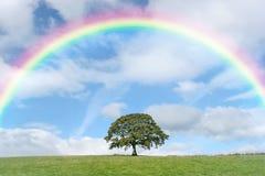 Alleine Eiche und Regenbogen Stockfotos