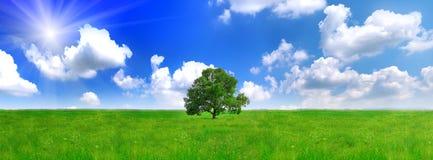 Alleine ein großer Baum auf grünem Feld. Panorama Lizenzfreie Stockfotografie