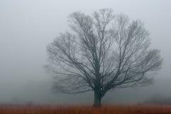 Alleine im Nebel Stockbild