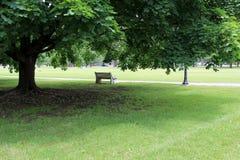 Alleine Parkbank unter Schattenbaum Stockbild