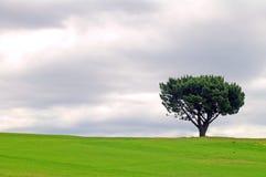 Alleiner Baum Stockbilder