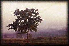 Alleiner Baum stockbild