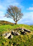 Alleiner Baum Stockfoto