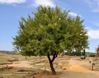 Alleiner Baum Stockfotos