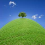 Alleiner Baum Lizenzfreie Stockbilder