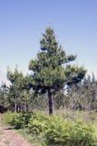 Alleiner Baum Lizenzfreie Stockfotografie