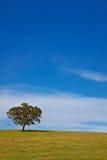 Alleiner Baum auf blauem Himmel Stockfotografie