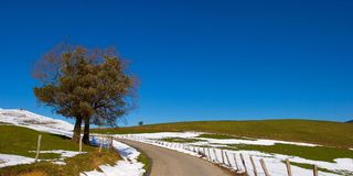Alleiner Baum auf dem Schneefeld Stockbilder