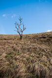 Alleiner Baum in Dovedale, Höchstbezirks-Nationalpark Stockbilder