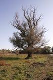 Alleiner Baum im Donau-Dreieck Stockfotografie