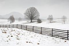 Alleiner Baum im Winter, in der schneebedeckten Landschaft mit Schnee und im Nebel, nebeliger Wald im backgroud Lizenzfreies Stockbild