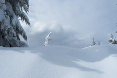 Alleiner Schnee bedeckte Baum in der Winterszene auf Berg Seymour-` s Hundebergwanderung stockfoto