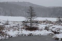Alleiner Winter lizenzfreie stockfotos