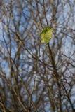 Alleines Blatt auf einem Zweig Stockbilder
