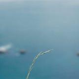 Alleines Gras gegen das tiefe blaue Meer Stockfoto