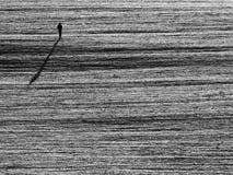 Alleinmannweg durch schneebedecktes Feld Stockbild