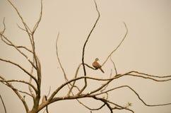 Alleinvogel Stockbild