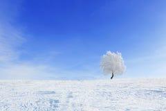 Alleinwinterbaum auf einem Gebiet mit blauem Himmel Lizenzfreies Stockbild