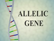 ALLELIC GENE concept. 3D illustration of ALLELIC GENE script with DNA double helix , isolated on pale blue gradient Stock Photo